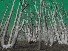 bosque de árboles muertos por lluvia ácida