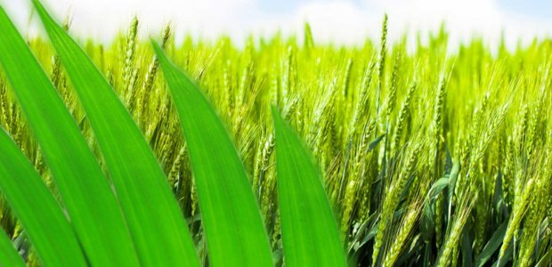 productos fitosanitarios ecológicos