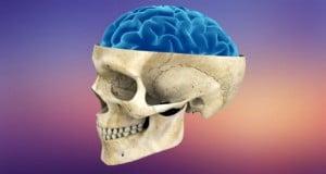 a mayor tamaño de cerebro más autocontrol