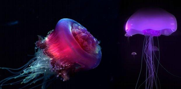 descubren nueva medusa gigante