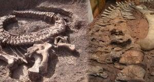 se descubre dinosaurio de cuello largo único en Argentina