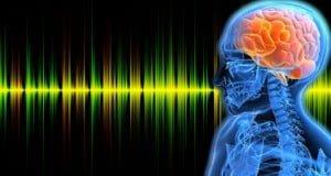 los ruidos fuertes modifican el cerebro