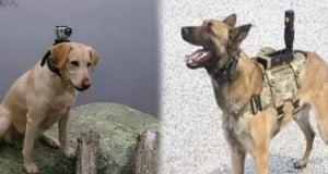 GoPro ahora también para perros
