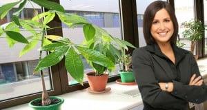 las plantas nos hacen más productivos