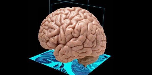alimentos que potencian el cerebro