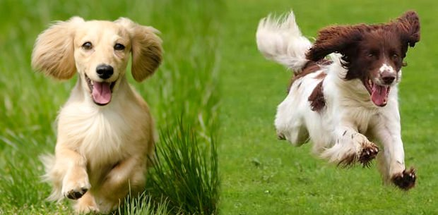 consejos para tener un perro feliz