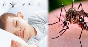 cuidando a los niños del dengue