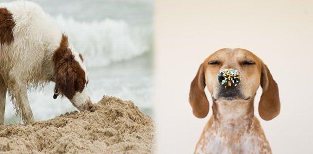 juegos de olfato para perros