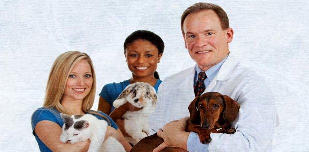 prevenir enfermedades y afecciones en los perros con aloe vera