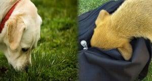 ideas de juegos de olfato para perros
