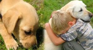 los perros y el olfato