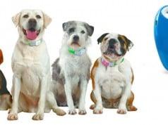 collar GPS para evitar la pérdida de mascotas