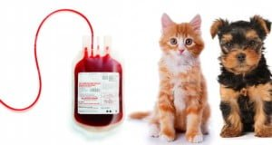 los animales pueden donar sangre
