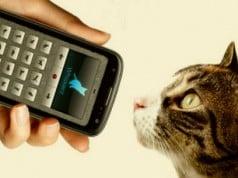 una aplicación para hablar con tu gato
