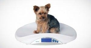 cuál es el peso ideal en los perros