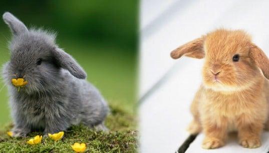 cuidados de un conejo recién nacido