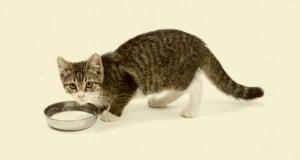 los gatos y la leche