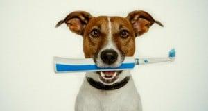 problemas dentales en perros