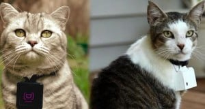 Catscam