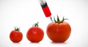 qué son los alimentos transgénicos