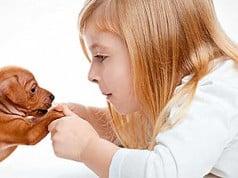 beneficios de las terapias con animales