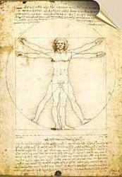 anatomía del hombre