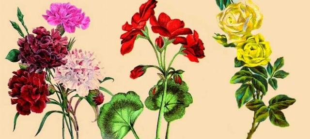 dibujos e ilustraciones de flores