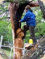 escultura en un tronco de árbol