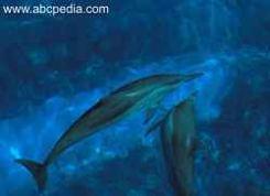 delfines comunicándose entre sí