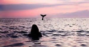 foto de delfin y humano