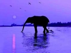 vida del elefante