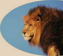 imagen de león
