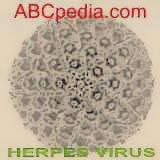 estructura molecular del herpes zoster