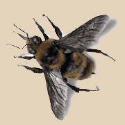 """Foto de la llamada """"abeja asesina"""""""