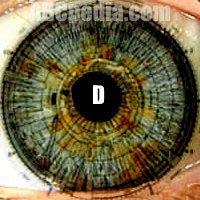 Iridología: el estado de nuestros órganos y tejidos según nuestra iris.