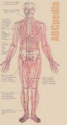 mapa-puntos-acupuntura