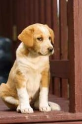 perro-adiestramiento
