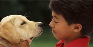 El perro labrador es uno de los mejores compañeros de los niños
