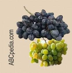 Variedades de la uva
